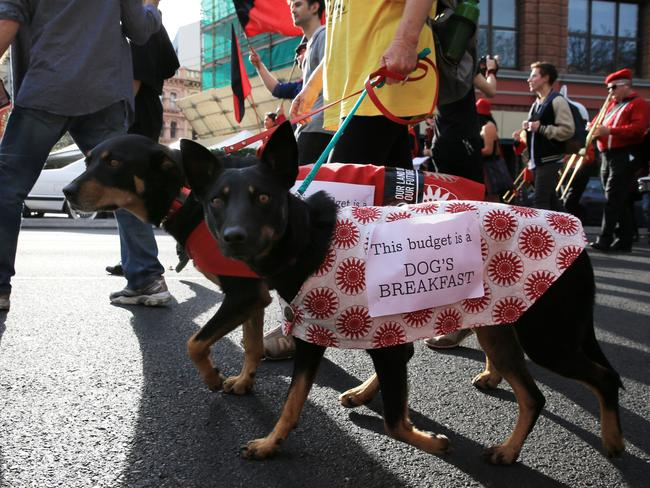These dogs were part of the peaceful Anti Tony Abbott march in Sydney. Police made arrests after a small body of protesters sat down in George Street at the end of the demonstration. Picture: Mark Evans