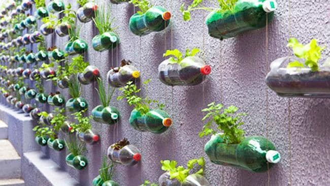 Green Wall Vertical Gardens Can Slash Household Temperatures, UniSA PhD  Student Rosmina Bustamiu0027s Study Finds