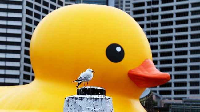 The Rubber Duck measures up to new neighbours at a rehearsal in Cockle Bay this morning. Picture: Adam Taylor
