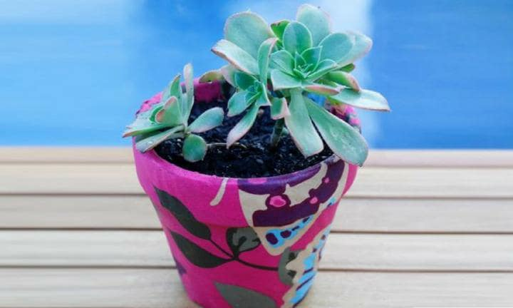 childcare gift plant 2