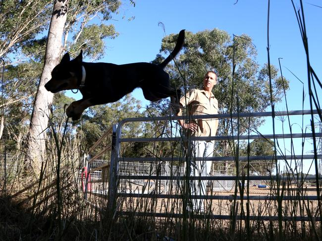Can A Working Farm Dog Be Retrained