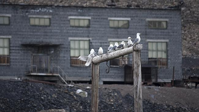 """Seagulls offer a breath of life into a town at the """"edn of earth"""". Picture: Flickr Kitty Terwolbeck"""
