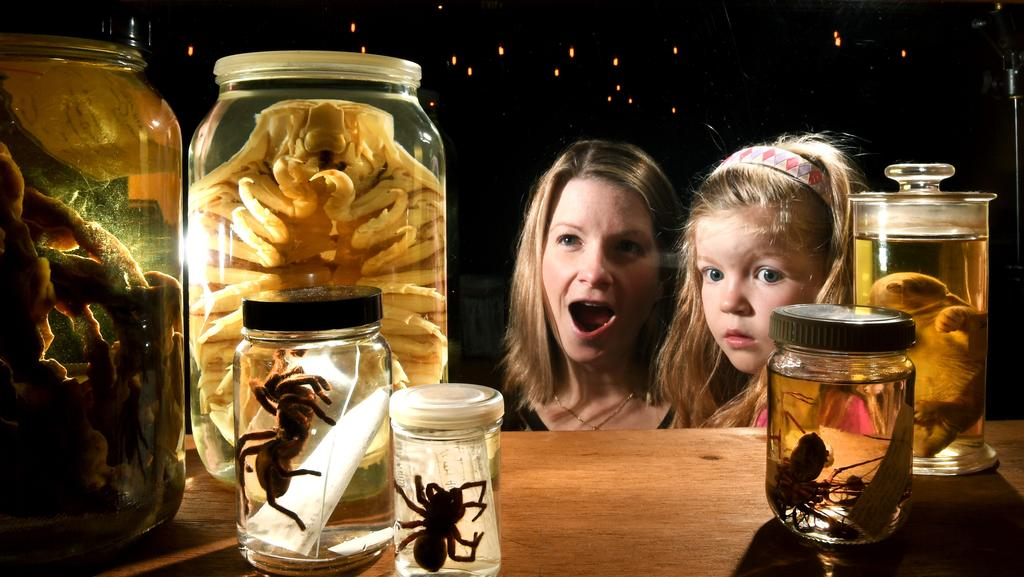 SCARY: Kerryn Dempsey with daughter Makayla, 4, looking at items from the SA Museum's Natural History Collection.  <b>Picture: </b>TRICIA WATKINSON