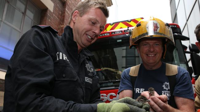 Senior firefighter Craig Frost and MFS Station Officer Declan Dwyer, who rescued the duckling. Picture: EMMA BRASIER