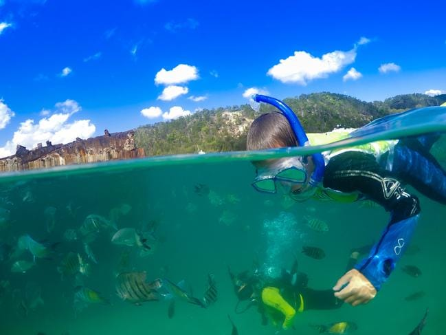 Whether you're snorkelling or scuba diving, the underwater view is incredible. Picture: Tangalooma Island Resort