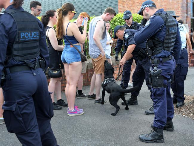 Police sniffer dogs check the incoming crowd for drugs at Stereosonic in Brisbane.