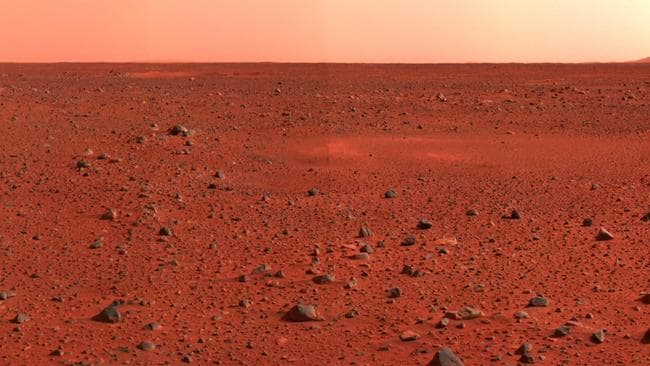plants grown in martian and lunar soil by dutch researchers