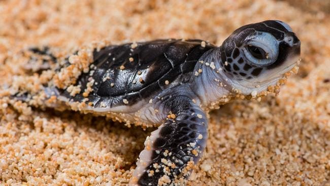 Turtles Queensland: Raine Island Recovery Project | The ...
