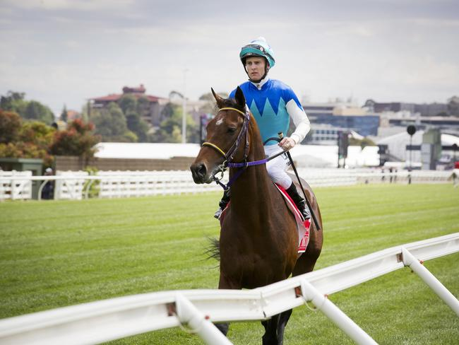 Zac Purton rides Japanese stayer Admire Rakti towards the barriers for the start of the 2014 Emirates Melbourne Cup. The horse later died. Picture: Nathan Dyer