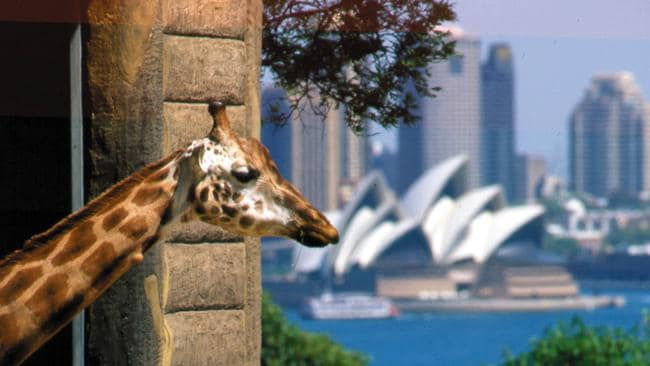 Taronga says the public could confuse the new zoo with its own on Sydney Harbour.