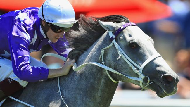 D'Argento will target the Randwick Guineas in the autumn.