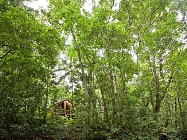 The Canopy Rainforest Treehouses.