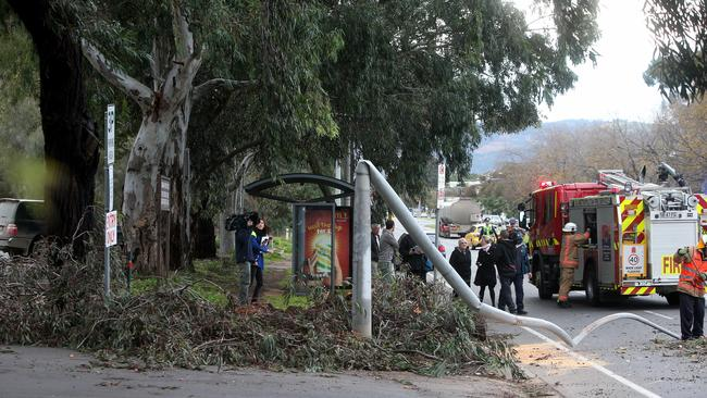 A tree branch has fallen on a car on Greenhill Rd in Unley. Picture: Simon Cross