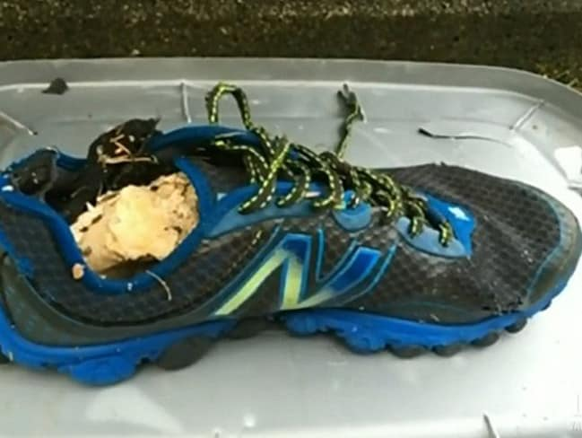 Shoes with severed feet are washing up on Pacific Northwest beaches.