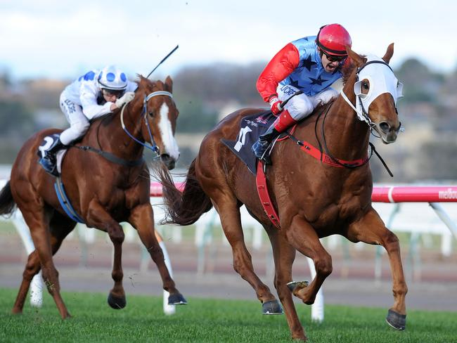 Aeratus is in career-best form this campaign winning four of his five runs. Picture: Vince Caligiuri/Getty Images.