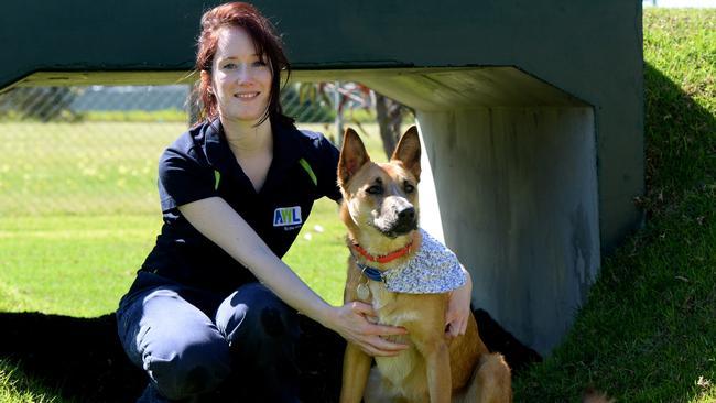 Animal Welfare League Sa Dogs For Adoption