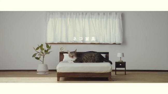 A Japanese Company Has Designed A Luxury Line Of Furniture For Your Cat.