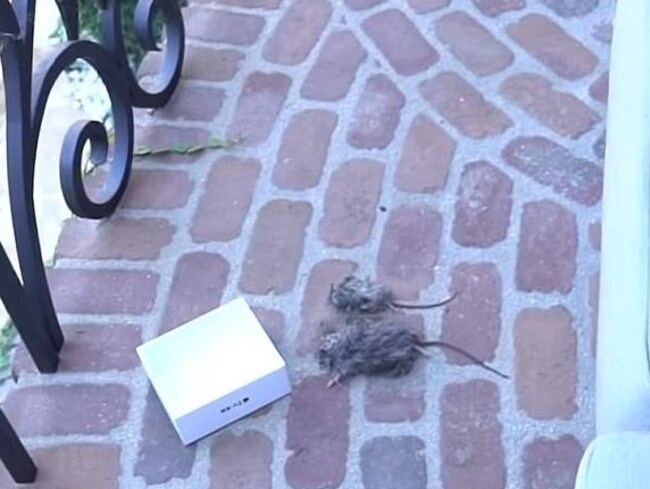 In one video, Paul tasers the bodies of two dead rats. Picture: Youtube
