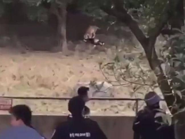 Zoo visitors watched in horror as tigers mauled a man to death. Picture: CGTN