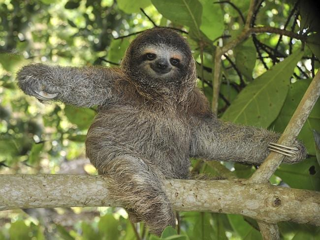 Okay, not these kind of sloths, but you get the picture.