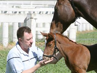Horse flu. Glenlogan Park Stud manager Steve Morley pictured with Bombshell and its week old filly at the Rathdowney stud. Reporter: Pat McLeod