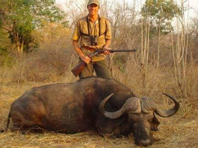 One of the buffalo's McGrath hunted.