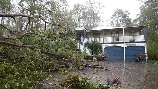 A fallen tree at a property owned by Rita and Henry Bollier in Fern Gully Place, Mooloolah. PIC: Glenn Barnes