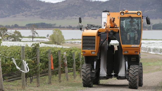Riversdale Estate owner, Ian Roberts with his mechanical grape harvester. PICTURE: Luke Bowden