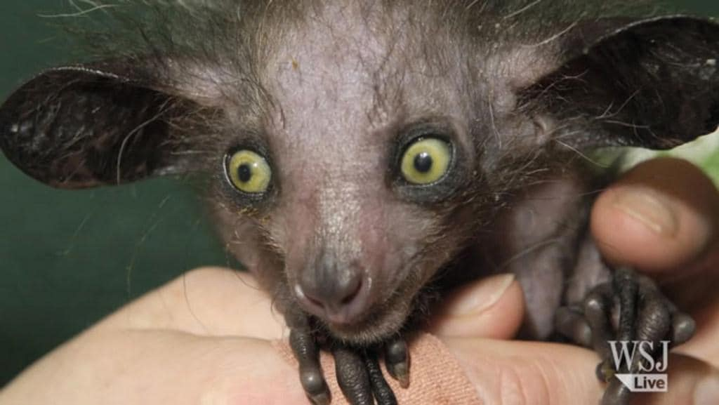 These 10 Wildlife Creatures Will Give You Nightmares