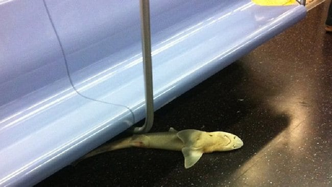 Shark on Subway