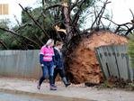 A massive uprooted tree in Blyth, in the Mid North. Picture: Dylan Coker