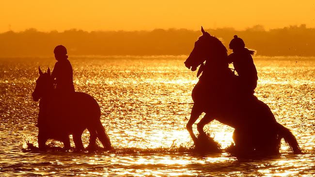 People dogs, and horses cool off at Altona dog beach. Picture: Nicole Garmston
