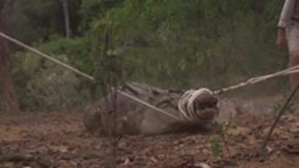 Crocodile's Powerful Death Roll Captured in Slow Motion