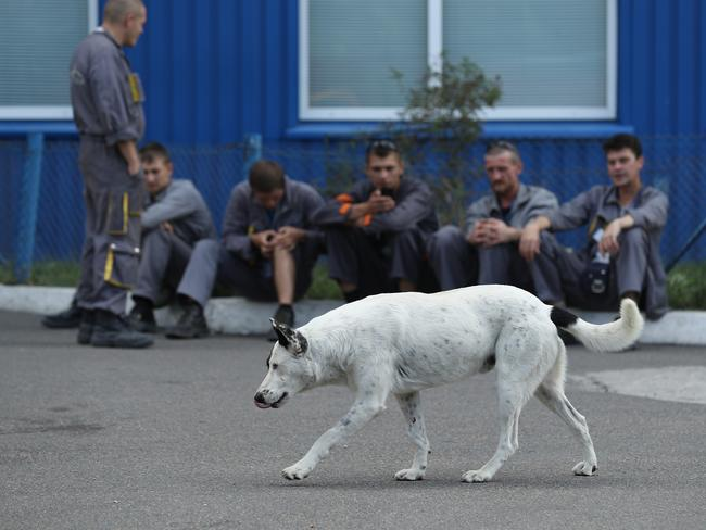 Workers on a break watch a stray dog saunter by outside an administrative building inside the exclusion zone at the Chernobyl nuclear power plant. Picture: Getty Images