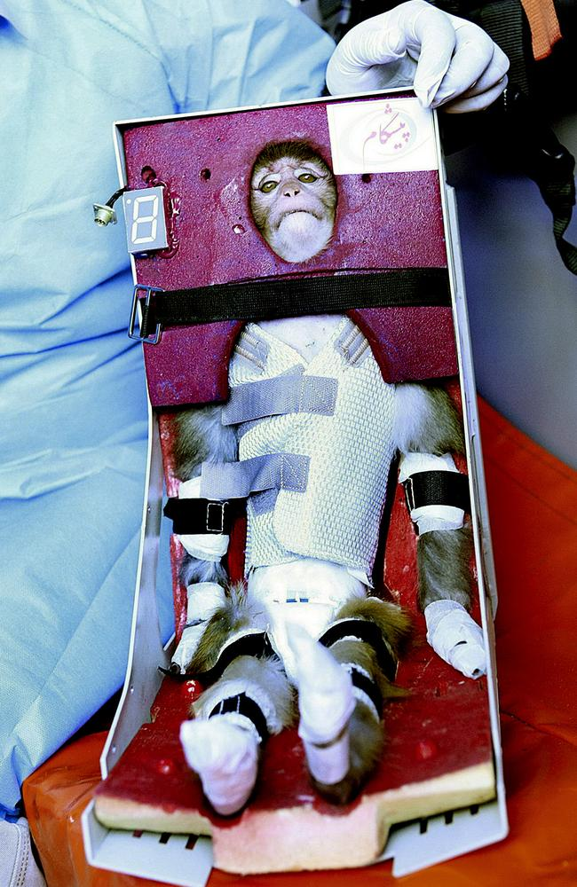 In this picture obtained from the Iranian Students News Agency, ISNA, scientists surround a monkey ahead of a space launch in an undisclosed location in Iran. A gray-tufted monkey strapped in a pod resembling an infant's car seat rode an Iranian rocket into space and returned safely, officials said in 2013. Picture: Mohammad Agah