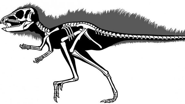 Some heterodontosaurids, such as the Chinese Tianyulong (shown here), grew to less than 600cm in length and rank as dwarfs in the dinosaur era. Illustration by Carol Abraczinskas, Paul Srereno