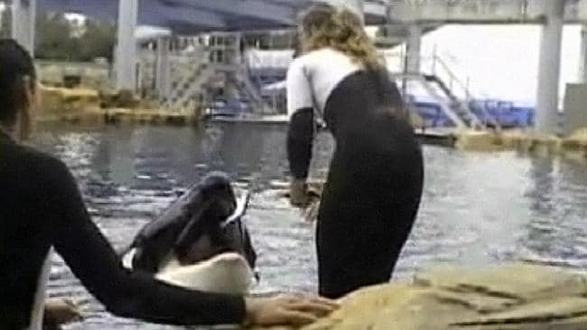 This photo shows trainer Dawn Brancheau before the accident in which Tilikum pulls her into the water and thrashes her around, killing her at SeaWorld in Orlando, Fla. (Pic: AP Photo/Todd Connell, HO)