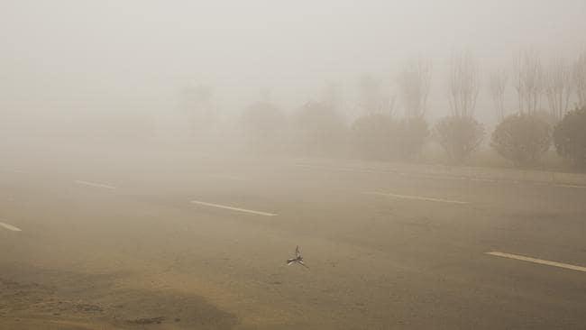 A bird flies in heavy smog in Beijing, China. Picture: Lintao Zhang/Getty Images
