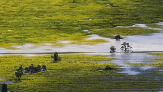 Canola fields near Brad Shephard's property at Lake Cowal, 70km west of Forbes, where 80% of his crops are flooded and lost. Picture: Dylan Robinson