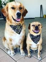 Willow and Lenny are ready to go for a walk. These two love their walks and are well known dogs around Glenelg. Picture: Tori Brown