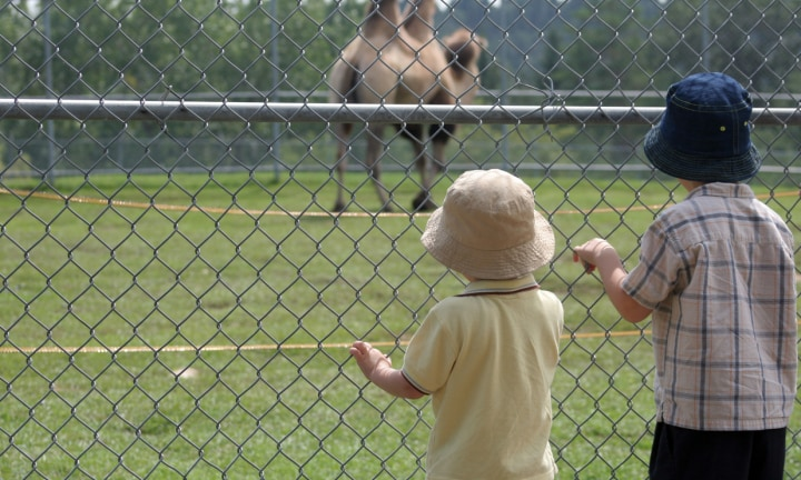 Two-year-old boy dies in zoo's camel enclosure