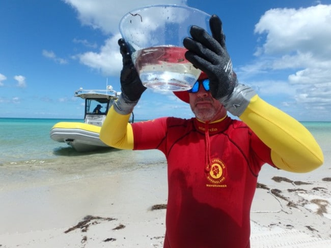 Surf Life Saving Queensland confirmed an Irukandji was found on Fraser Island in a stinger drag.