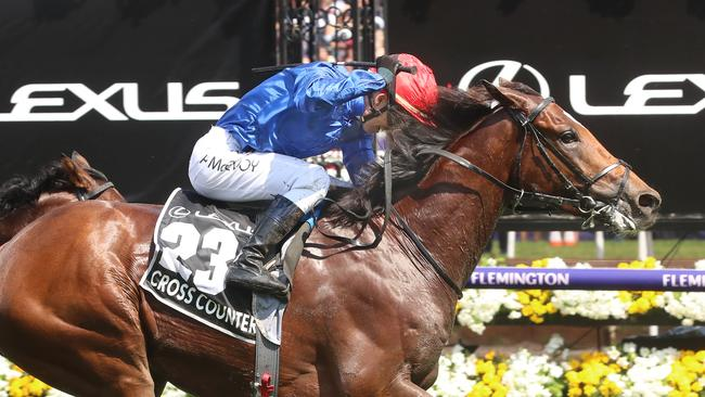 Cross Counter's Melbourne Cup win gave one punter a massive payday. Picture: Alex Coppel