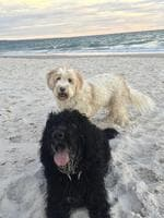 These two love taking long walks on the beach. Picture: Nicole Carey