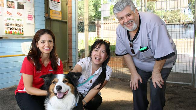 Dog Day Care Blacktown