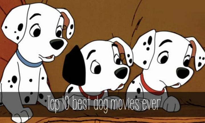 Top-10-best-dog-movies-ever-villagevoices-600x360