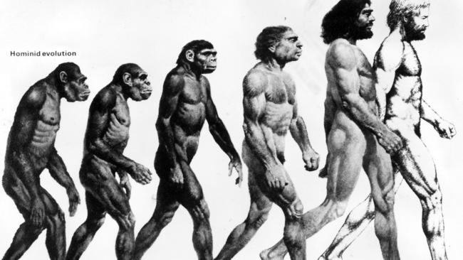 The type of diagram Dr Herries thinks lacks the real complexity of human evolution. Picture: supplied