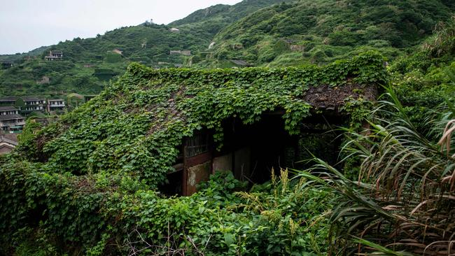 A close-up of the overgrown vegetation on the buildings. Picture: AFP/Johannes Eisele