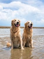 These boys ( Bailey Leo) are the cutest and best of mates. They love getting down to the beach for some croc spotting and follow me around the house until I take them - Gretel Engelhardt