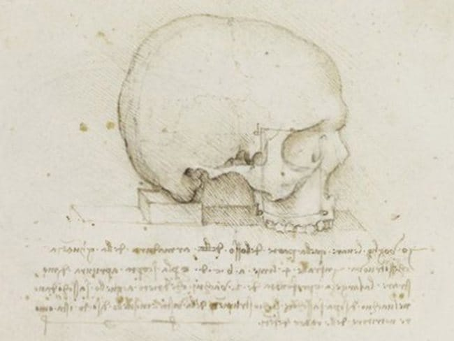 Fine features ... The similarities between Leonardo da Vinci's drawings of the human cranium and the alabaster skull have been deemed too close to be cooincidence.